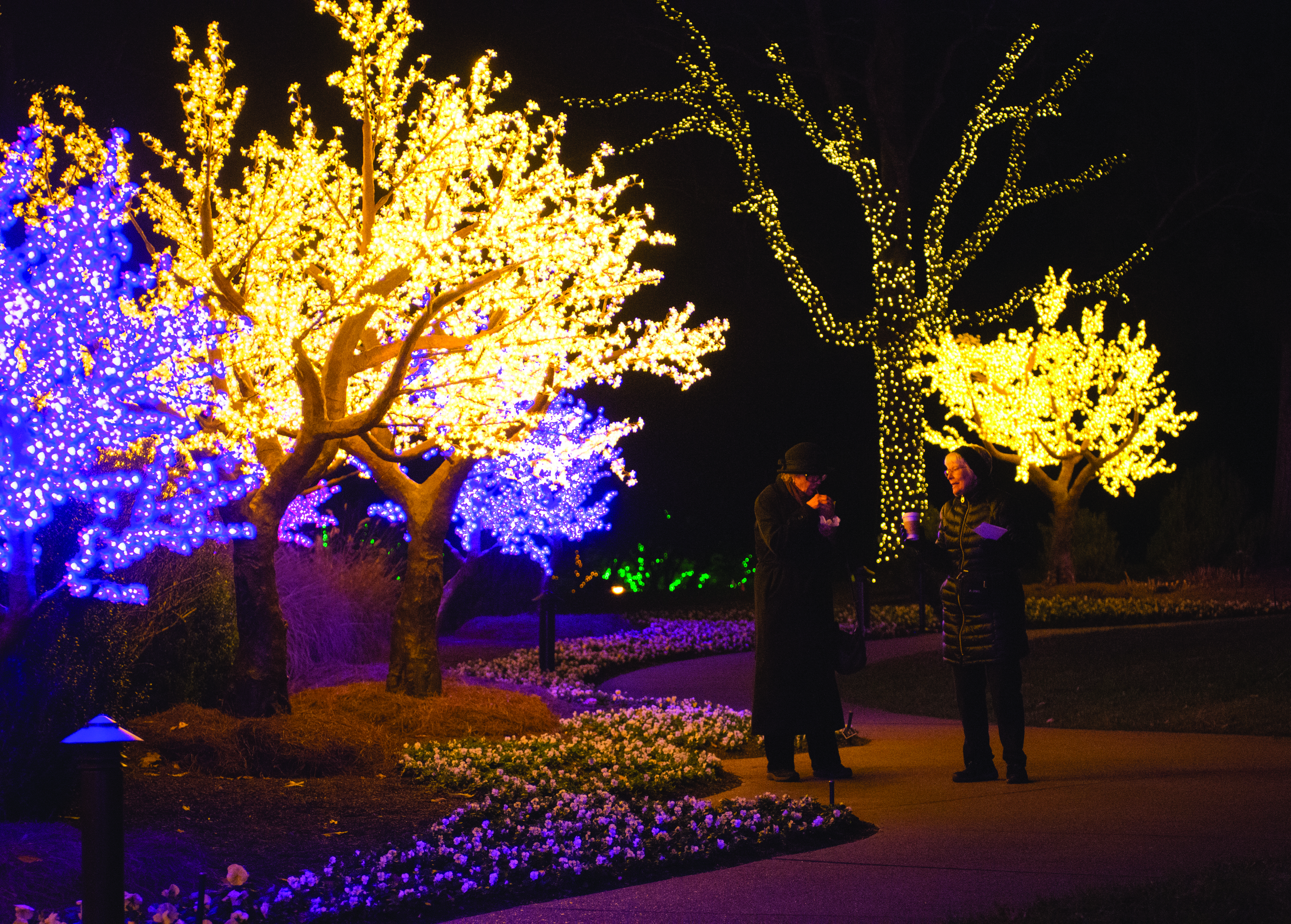 Cheekwood Holiday Lights, credit Caitlin Harris