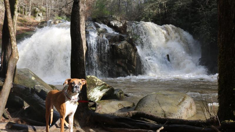 Dog at Cherokee National Forest