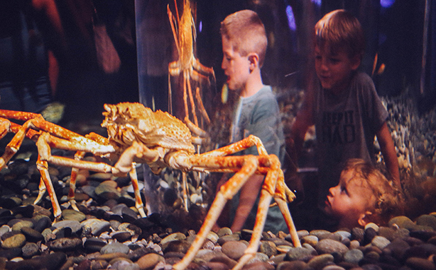 Giant Crabs TN Aquarium