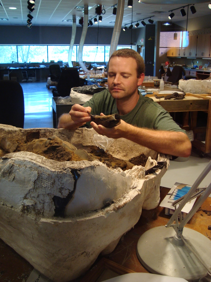 Lab preparator working on rhino skull at Gray Fossil Site and Museum