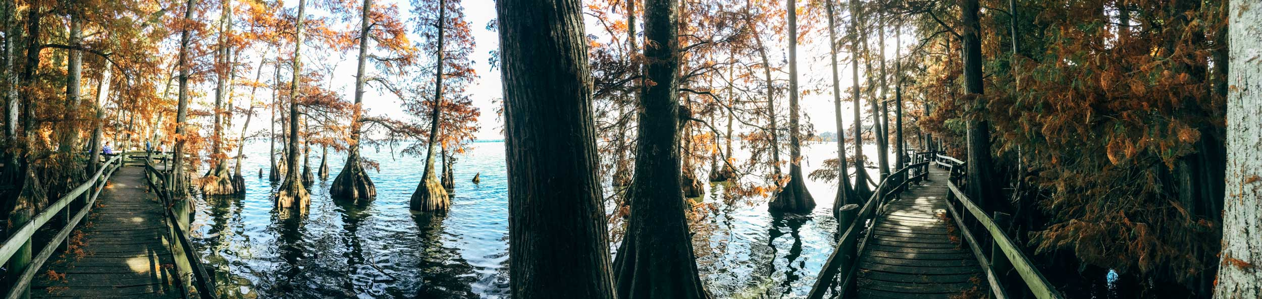 Reelfoot Lake two hours north of Memphis in Tiptonville, Tennessee