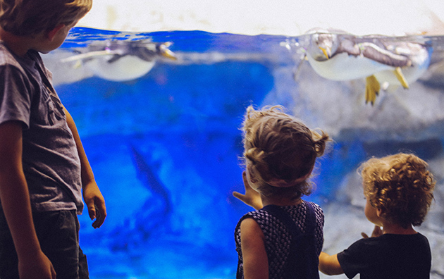 Penguins TN Aquarium