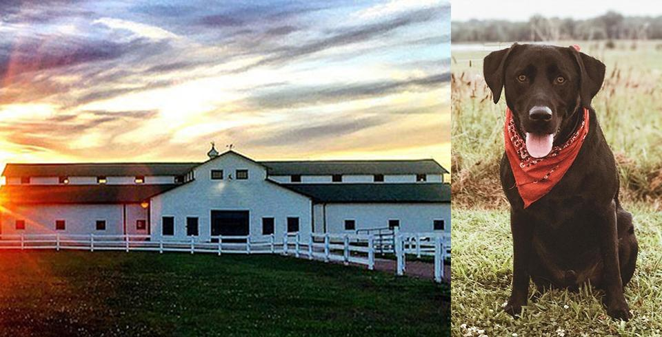 Beautiful Harlinsdale Farm in Franklin, Tennessee
