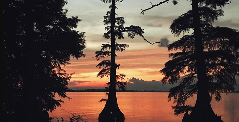 Reelfoot Lake: Tiptonville
