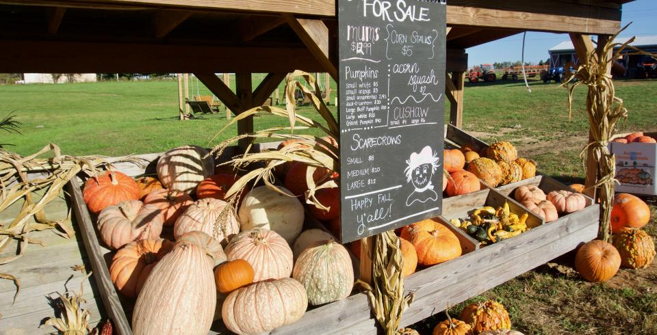 Fall fun at Autumn Acres in Crossville