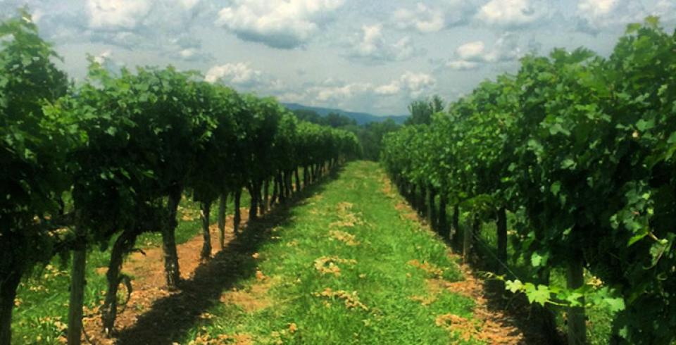 Great Valley Wine Trail