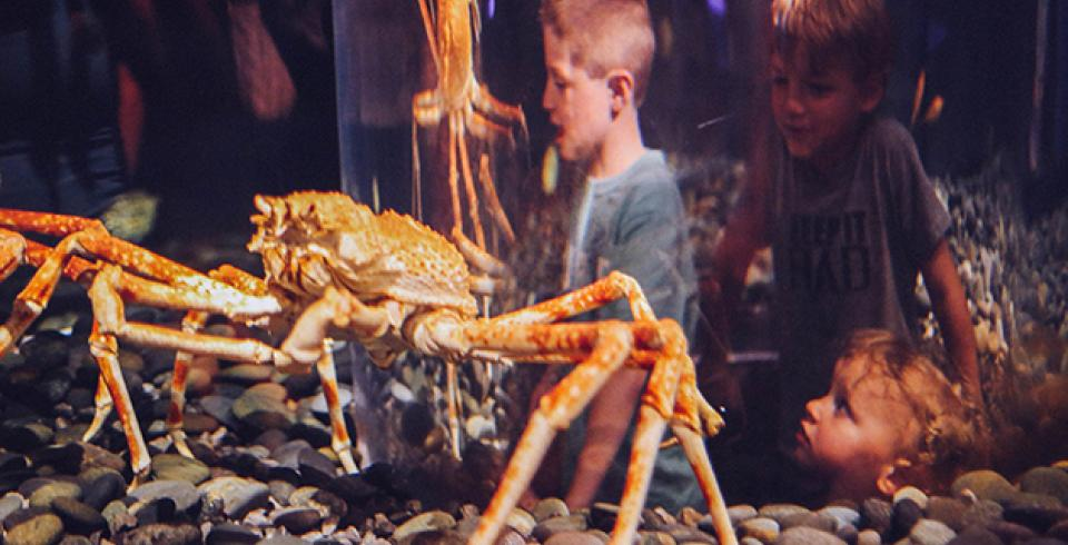 Kids watching giant crabs at Tennessee Aquarium in Chattanooga