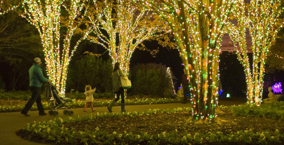 A girl walks through trees with strung holiday lights at Cheekwood
