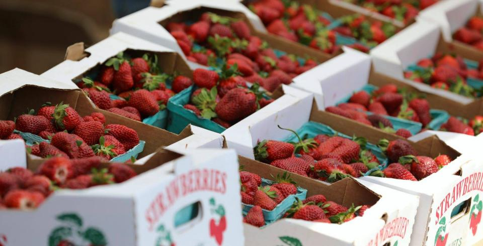 Strawberries from Middle TN Strawberry Festival in Portland TN