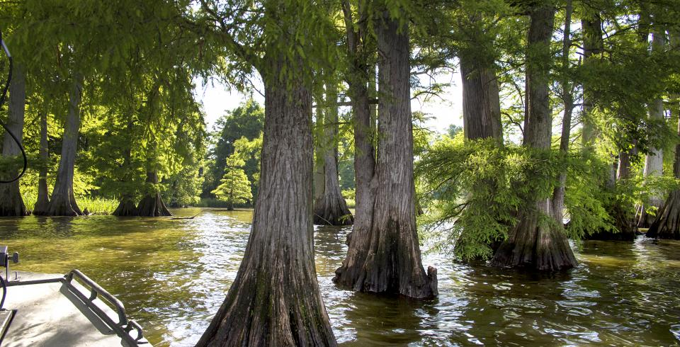 Prime winter fishing at reelfoot lake in west tennessee for Reelfoot lake fishing report