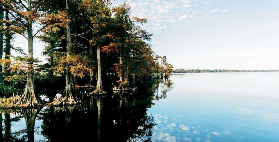 Reelfoot Lake in Tiptonville
