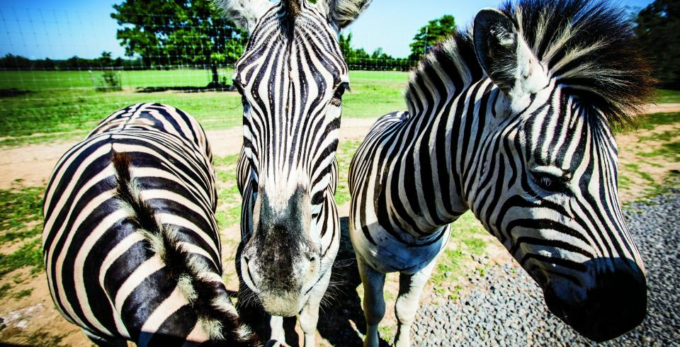 Get Up Close to Animals in Tennessee - Tennessee Vacation
