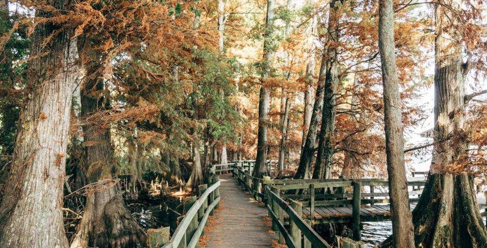 Reelfoot Lake State Park boardwalk
