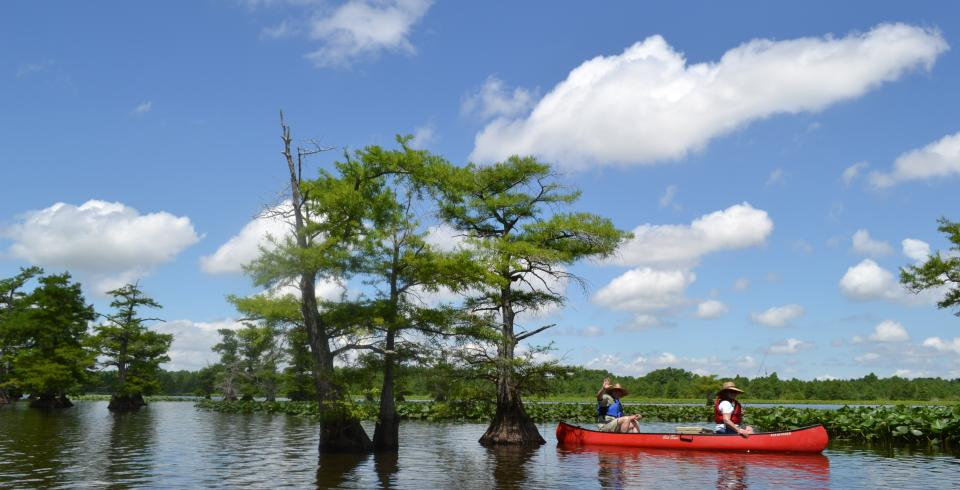 A couple canoeing on Reelfoot Lake in Tiptonville, Tennessee