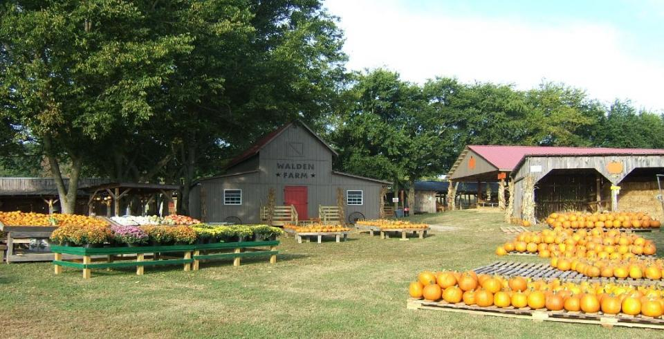 Walden Farm, Smyrna, TN