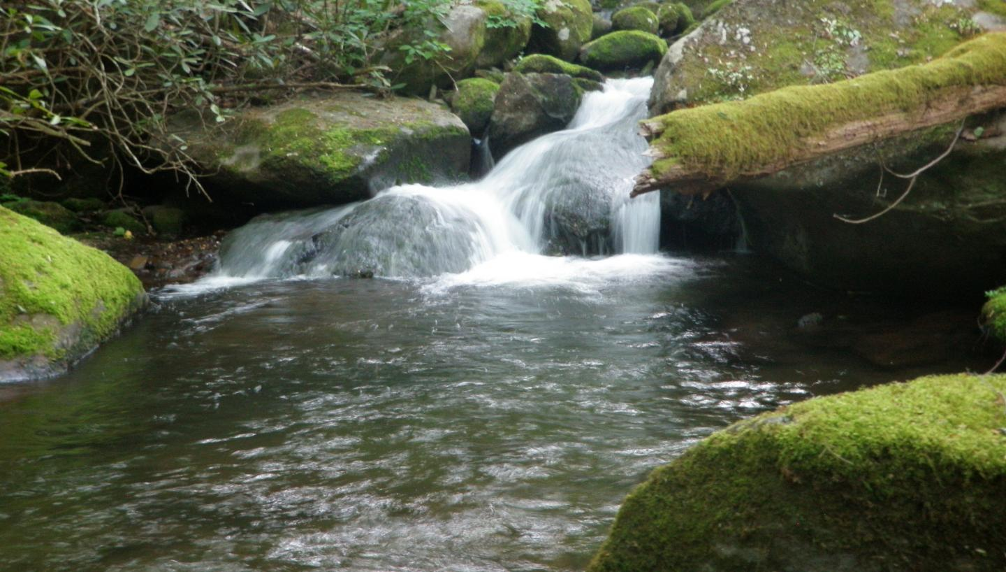 Explore Tennessee's Scenic Beauty During Pigeon Forge Wilderness Wildlife Week