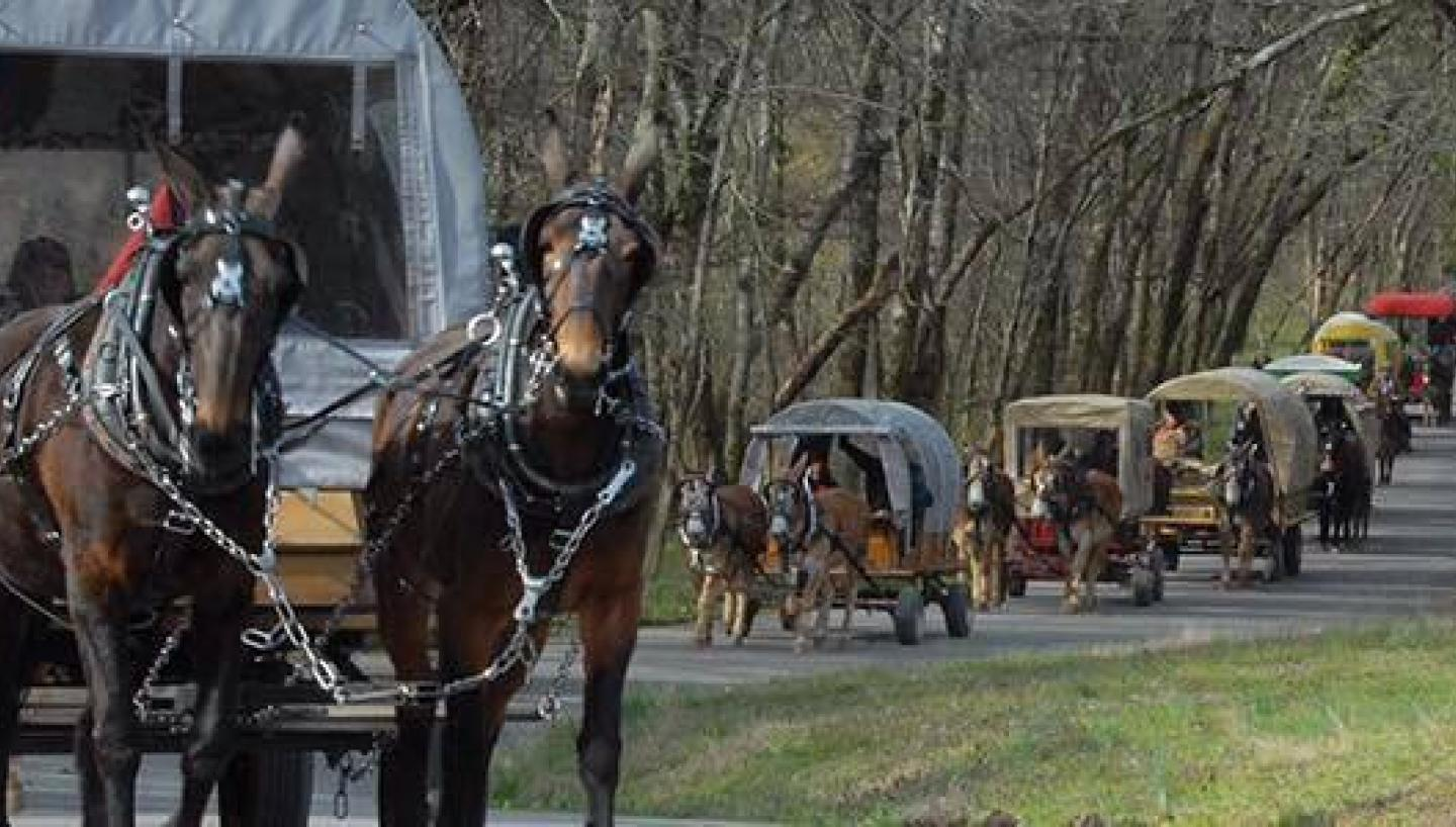 Maury County, Tennessee: Mules, Music & More
