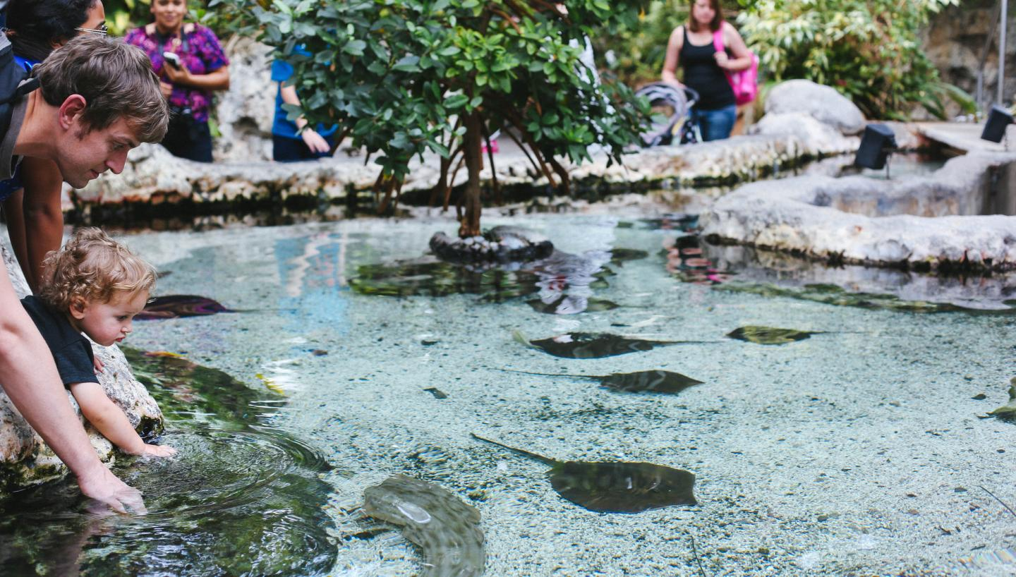 Get in Touch (Literally) With Nature at the Tennessee Aquarium