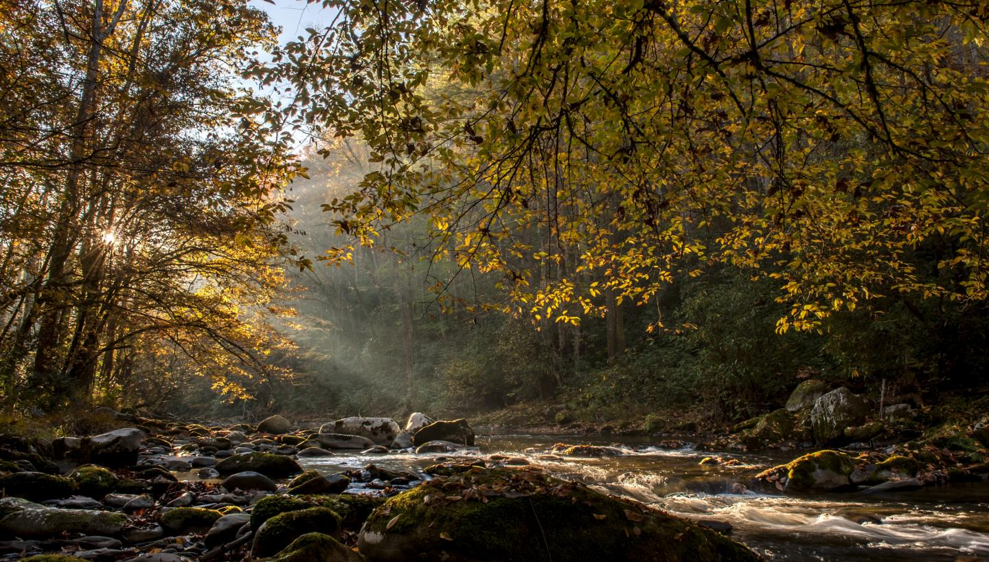 Smoky Mountains Fall Colors Best Time 2020.When Autumn Starts In Tennessee Tennessee Vacation