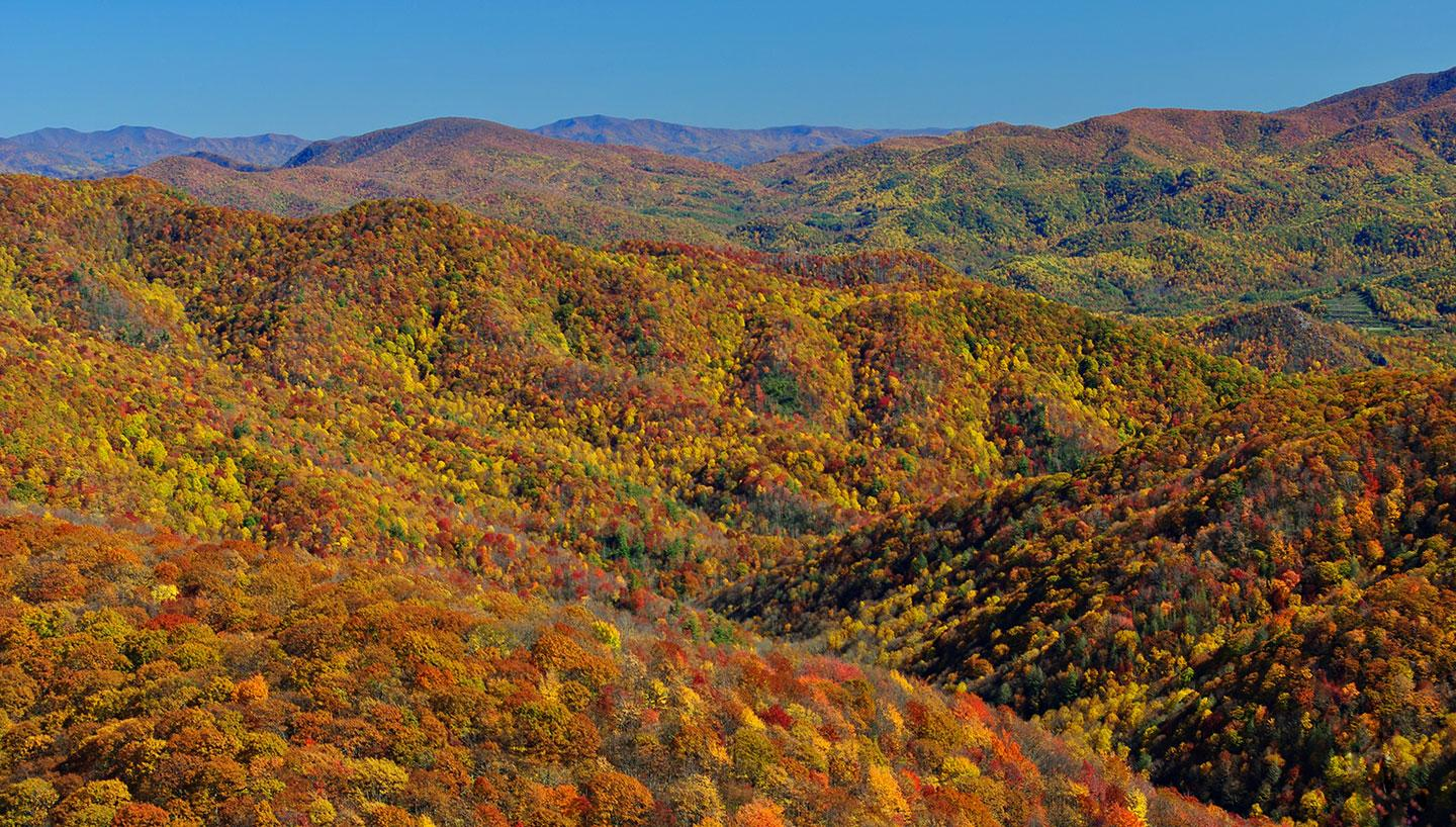 Exploring Autumnal Beauty Through Tennessee Trails