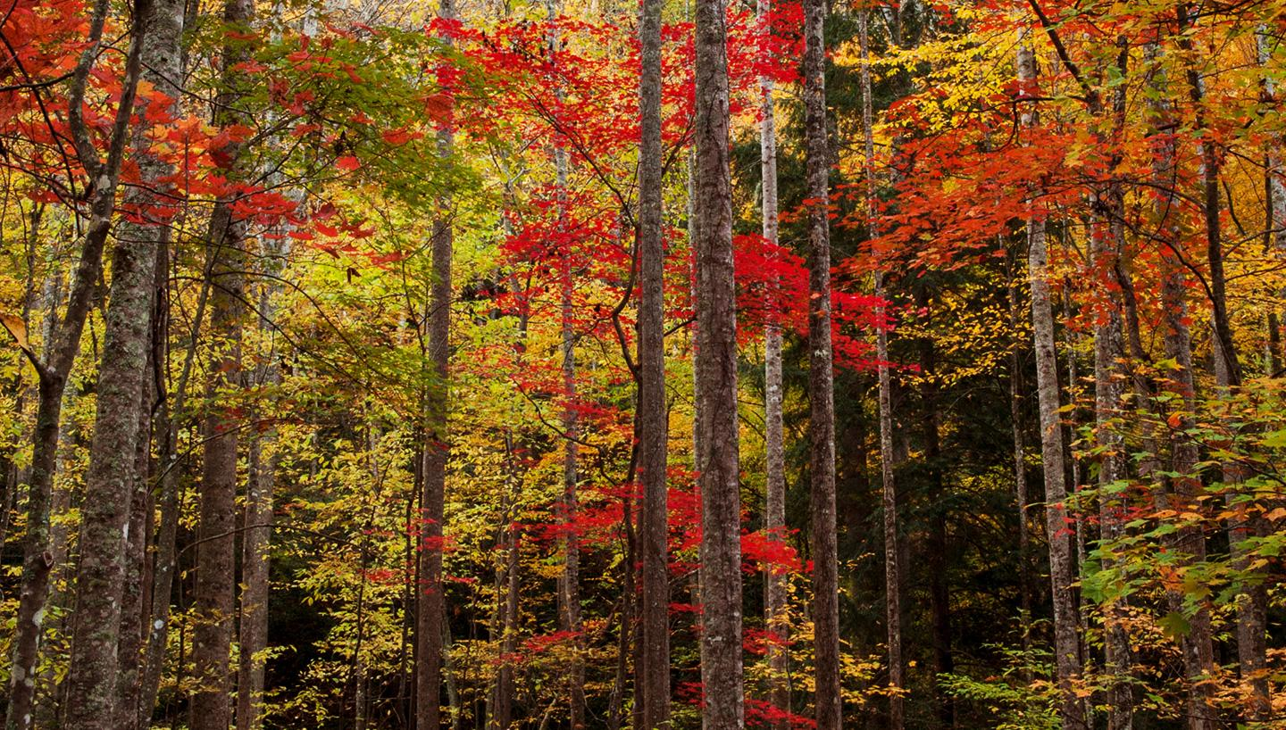 Temperature In Pigeon Forge Tennessee >> Two Days of Leaf Peeping in the Smokies - Tennessee Vacation