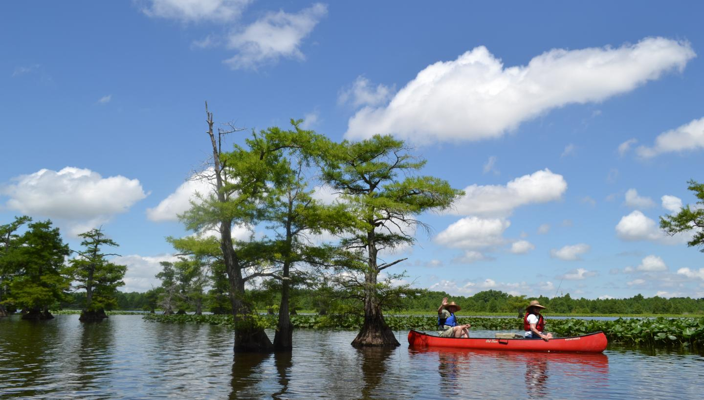 Reelfoot Lake provides ample bluegill fishing opportunities