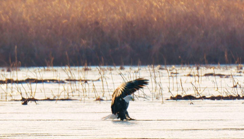 14th Annual Reelfoot Lake Eagle Festival