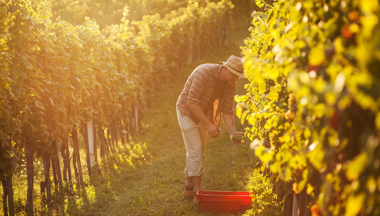 Highland Manor Winery