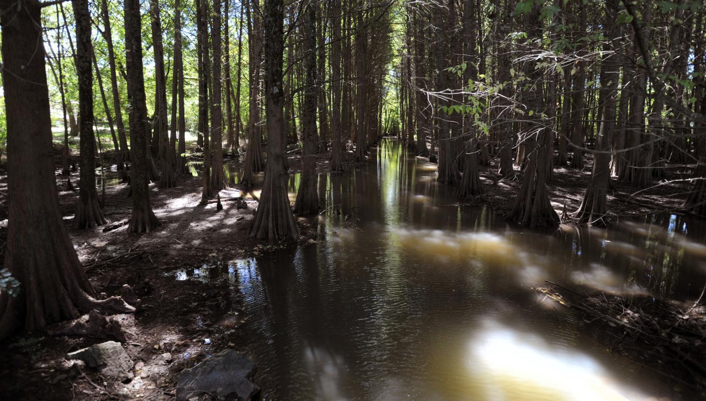 Cypress Grove Nature Park