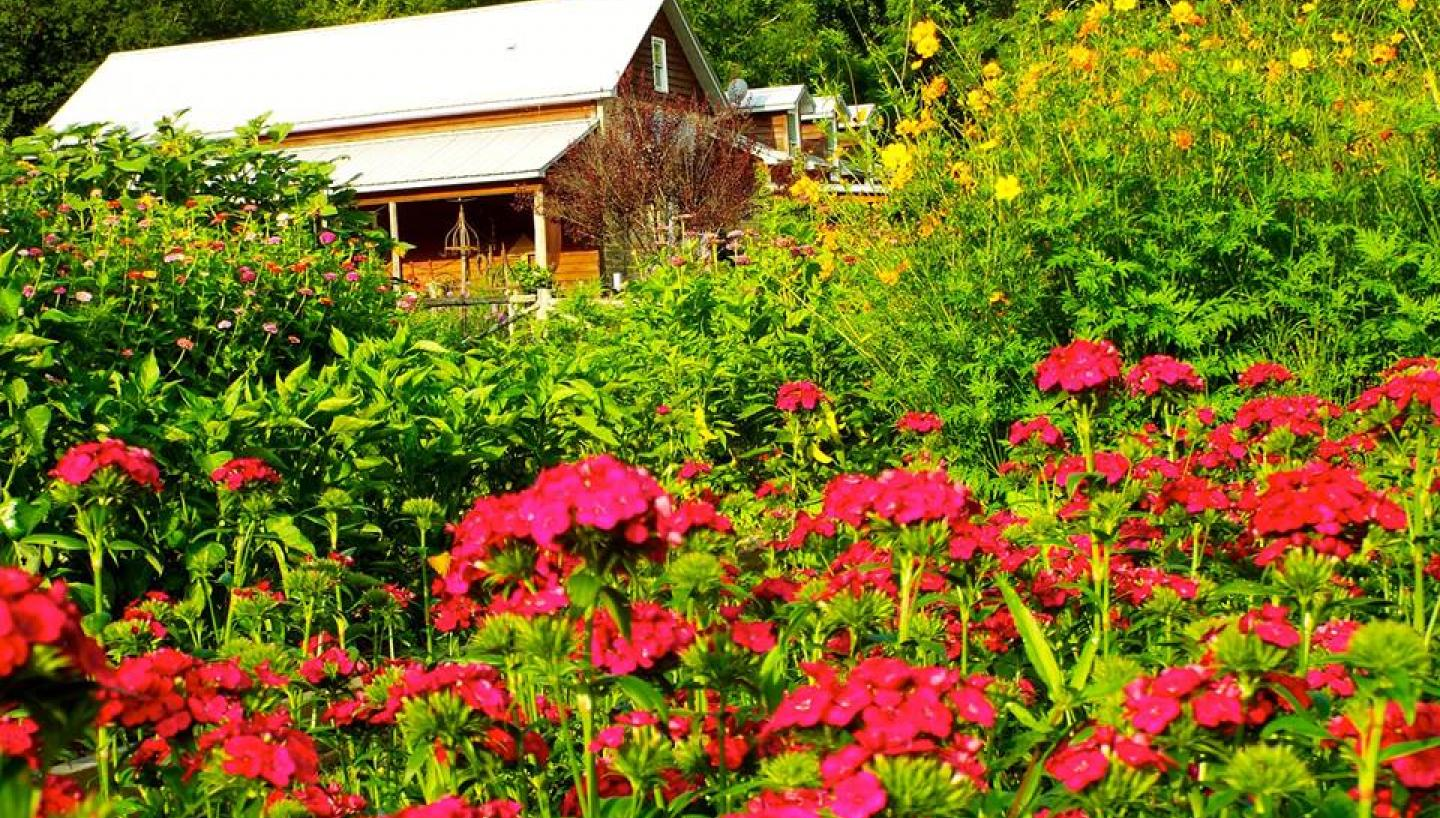 Madison Creek Farms In Goodlettsville Tn Tennessee Vacation