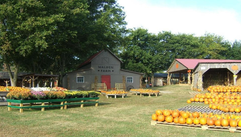Walden Farm