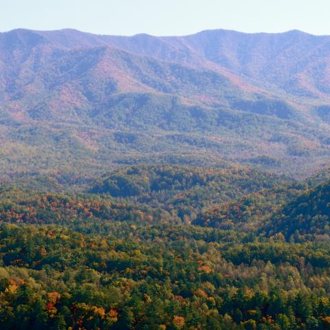 A Guide to Autumn Leaves in East Tennessee
