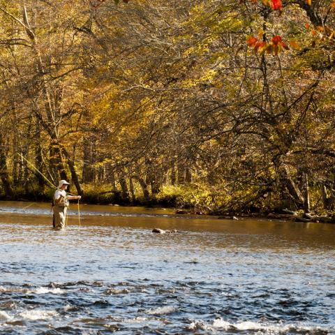 Four Reasons to Love Fall in Blount County, Tennessee