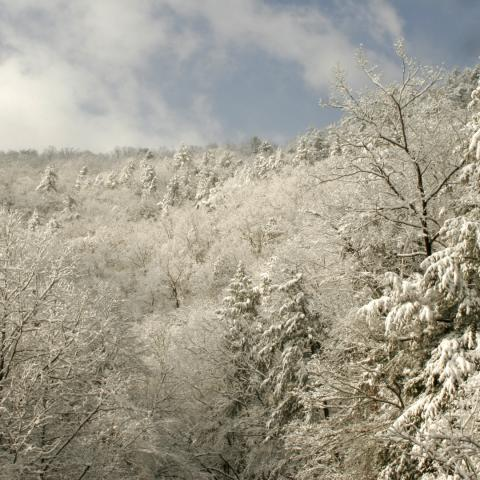 Winter Photo Spots You Should Explore in East Tennessee