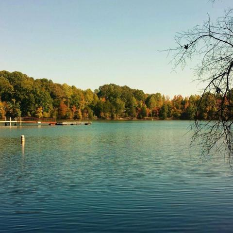 Tims Ford Lake: A Winter Retreat for Perfect Tennessee Fishing