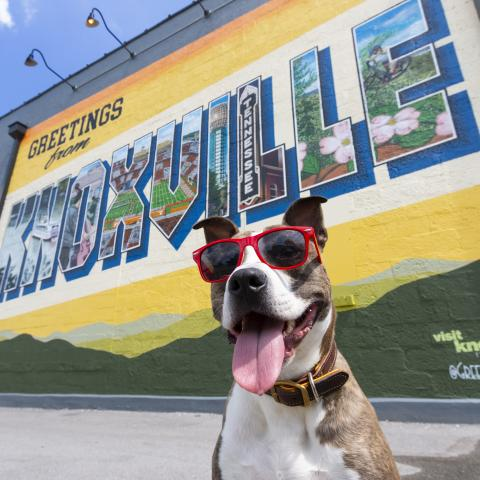 A dog in front of the Greetings from Knoxville mural