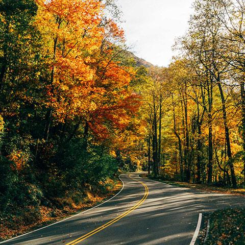 Plan Your Fall Foliage Journey on Tennessee's Beautiful Byways