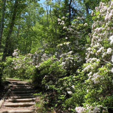 Go to These Tennessee Small Towns for Springtime Events