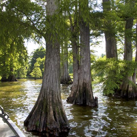 Prime Winter Fishing at Reelfoot Lake in West Tennessee