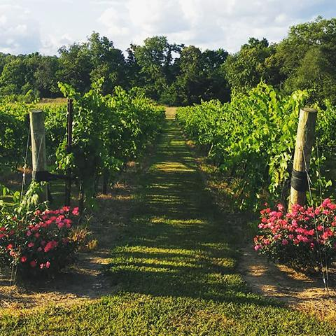 TN Wine Trails