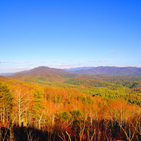 A view from  Buck Bald