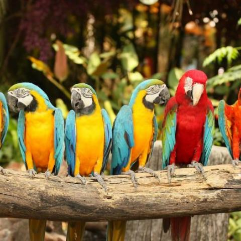 Colorful birds on a tree limb.