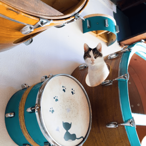 June Catter Cash in drum shelf