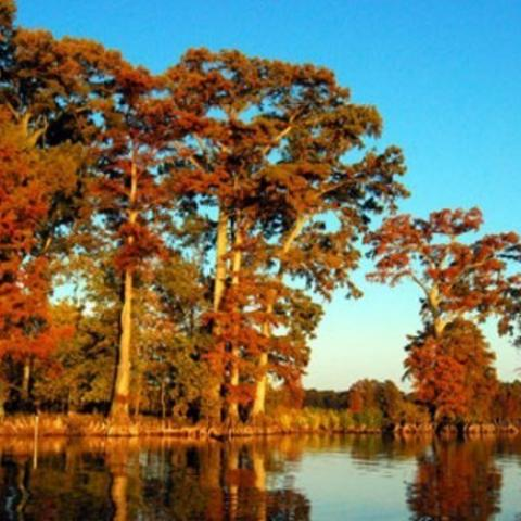 Reelfoot National Wildlife Refuge