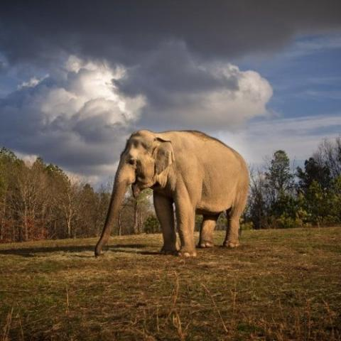 Tarra, The Sanctuary's Founding Elephant
