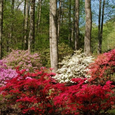 The University of Tennessee Arboretum