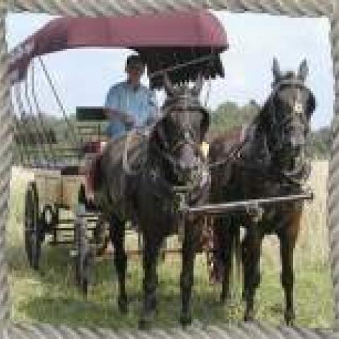Amish Homestead Farm