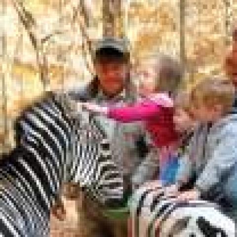 Briarwood Auto Safari