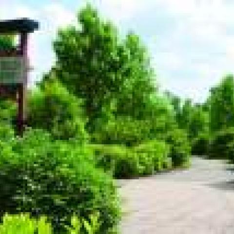 J. Travis Price Park / Springfield Greenway Trailhead