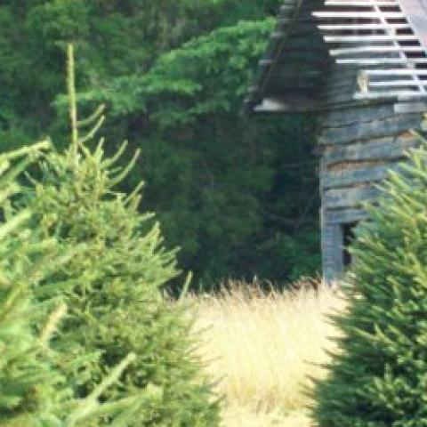 Bluebird Christmas Tree Farm